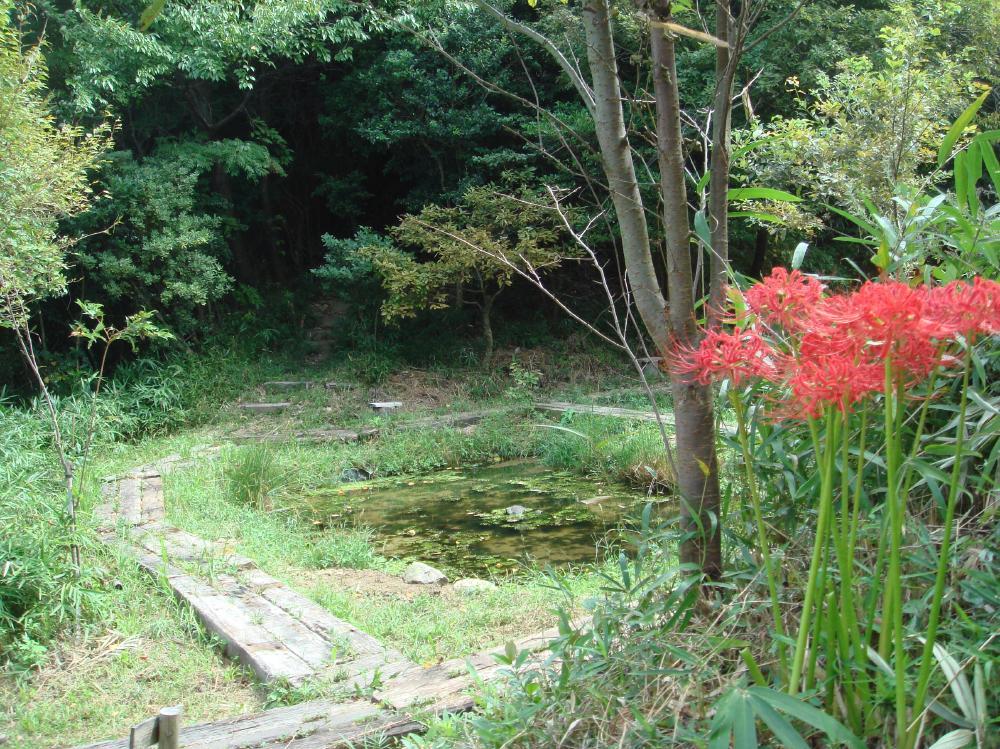 うみべの森の秋  by  (TATE-misaki)_c0108460_14241974.jpg