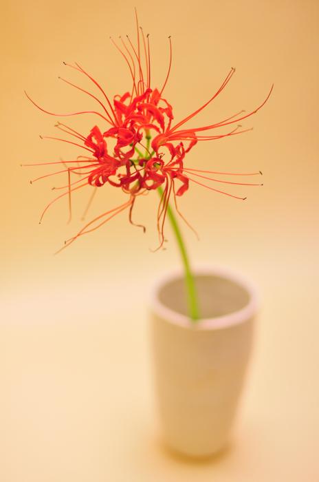ヒガンバナ / 花の図書館
