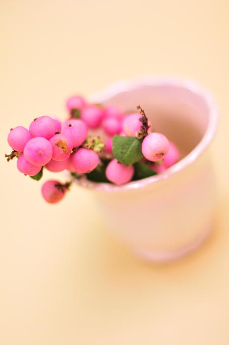 シンフォリカリフォス ピンク