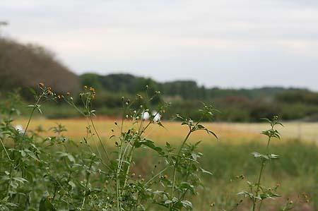 見沼自然公園.さぎやま記念公園へドライブ_f0030085_18573510.jpg