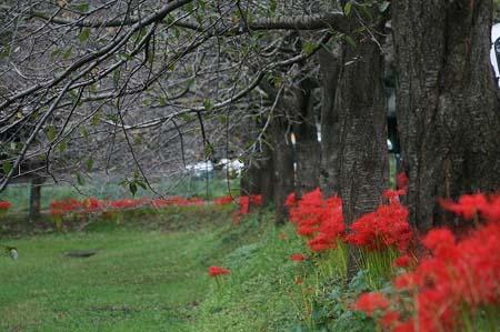 見沼自然公園.さぎやま記念公園へドライブ_f0030085_18583227.jpg