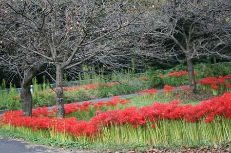 見沼自然公園.さぎやま記念公園へドライブ_f0030085_18585538.jpg