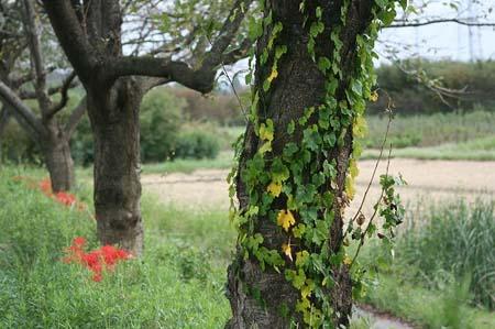 見沼自然公園.さぎやま記念公園へドライブ_f0030085_18593528.jpg