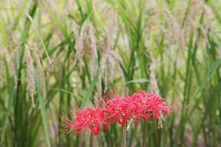 見沼自然公園.さぎやま記念公園へドライブ_f0030085_18594920.jpg