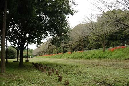 見沼自然公園.さぎやま記念公園へドライブ_f0030085_1953979.jpg