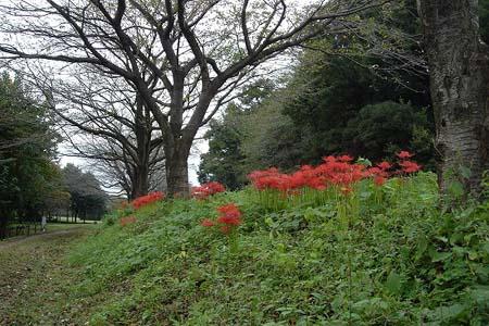 見沼自然公園.さぎやま記念公園へドライブ_f0030085_19607.jpg