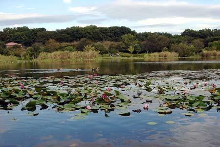 見沼自然公園.さぎやま記念公園へドライブ_f0030085_1961833.jpg