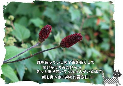 f0137096_2223051.jpg