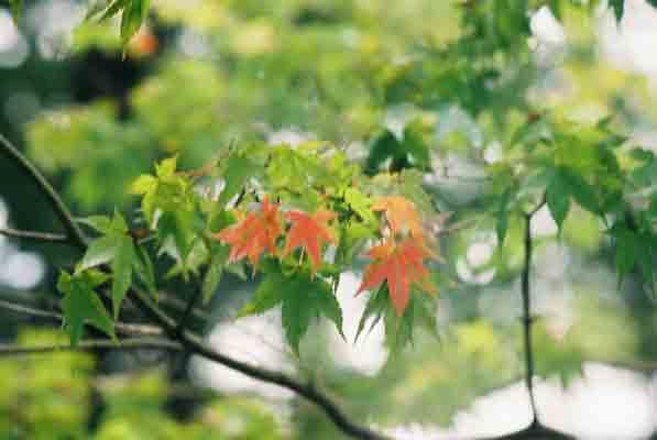富士山麓の思い出    seiichi.koeda_c0098759_223597.jpg