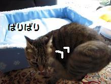 c0139488_1651361.jpg