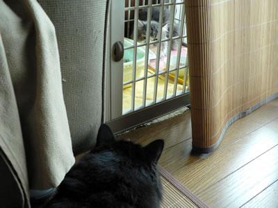 あれっ、あなたは猫さんですか?