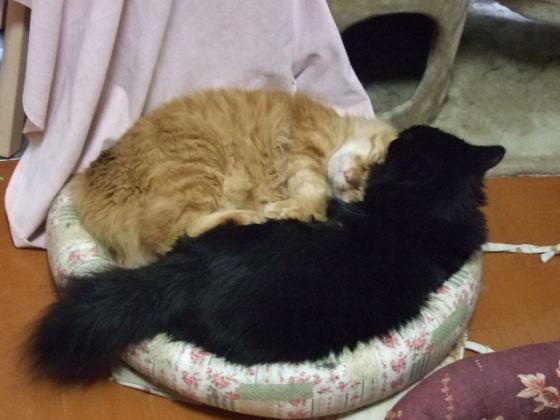 今期初猫だんご発動_d0002108_2038268.jpg