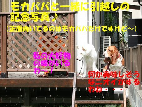f0121712_1743123.jpg