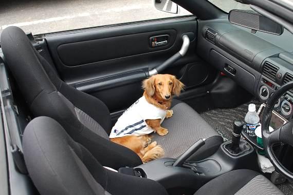 オープンカーで小布施_c0177814_1192852.jpg
