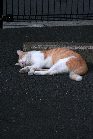 深き眠りにつくもの 2008/09/28-sat_f0031535_16301964.jpg