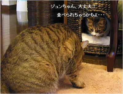 b0097848_1350117.jpg