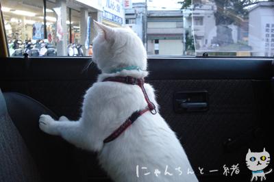 にゃんちんとブルーモーメント_e0031853_2503245.jpg