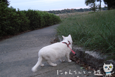 にゃんちんとブルーモーメント_e0031853_2515058.jpg