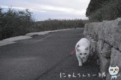 にゃんちんとブルーモーメント_e0031853_2523778.jpg