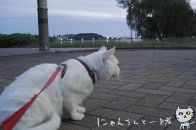 にゃんちんとブルーモーメント_e0031853_253038.jpg