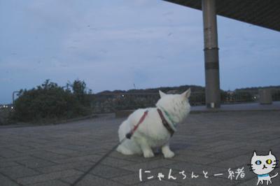 にゃんちんとブルーモーメント_e0031853_2533558.jpg