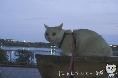 にゃんちんとブルーモーメント_e0031853_2542282.jpg