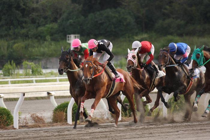 2008年9月27日(土) 高知競馬 10R 一発逆転 ファイナルレース_a0077663_193189.jpg