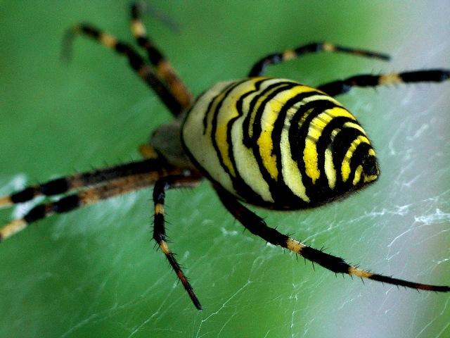 レースの様な蜘蛛の巣_d0105967_18461698.jpg
