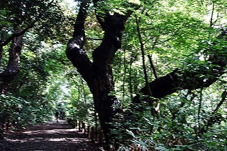 シロバナサクラタデ・・・自然教育園にて_f0030085_1561624.jpg