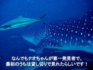 f0144385_561323.jpg