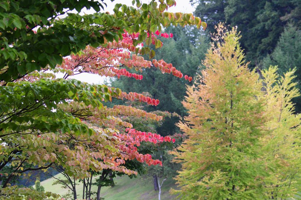 キセキレイ / 山は紅葉が始まりました_b0024798_5475263.jpg
