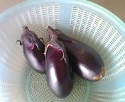 収穫_f0101128_11203748.jpg