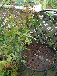 秋の庭_e0086738_8412290.jpg
