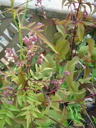 秋の庭_e0086738_8414279.jpg