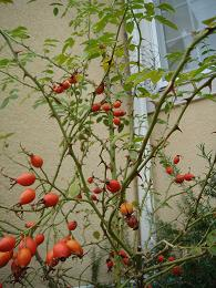 秋の庭_e0086738_8421063.jpg