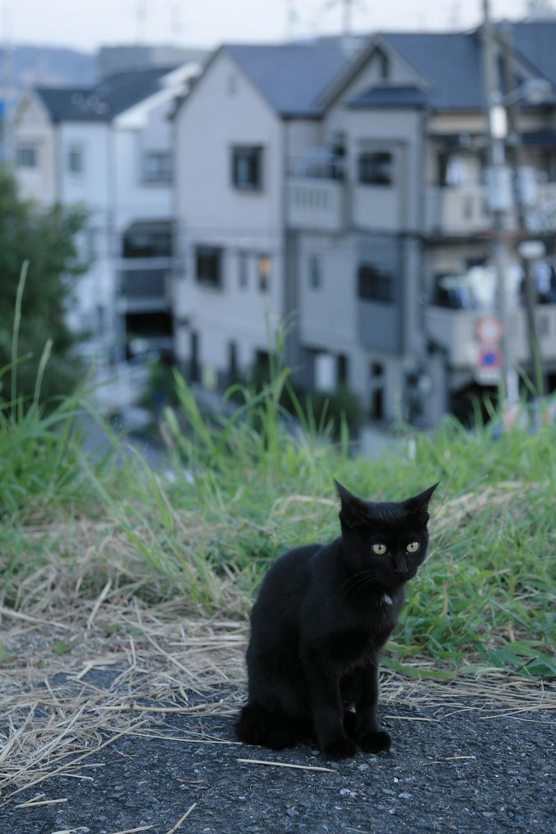 野良猫_f0021869_21335588.jpg