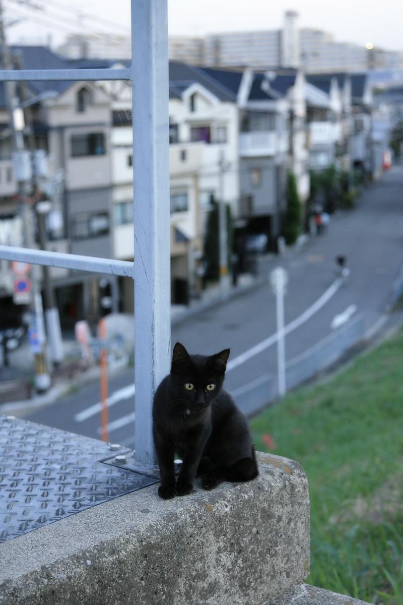 野良猫_f0021869_21364760.jpg