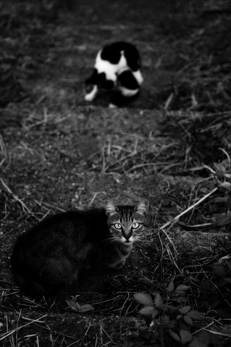 野良猫_f0021869_2137776.jpg