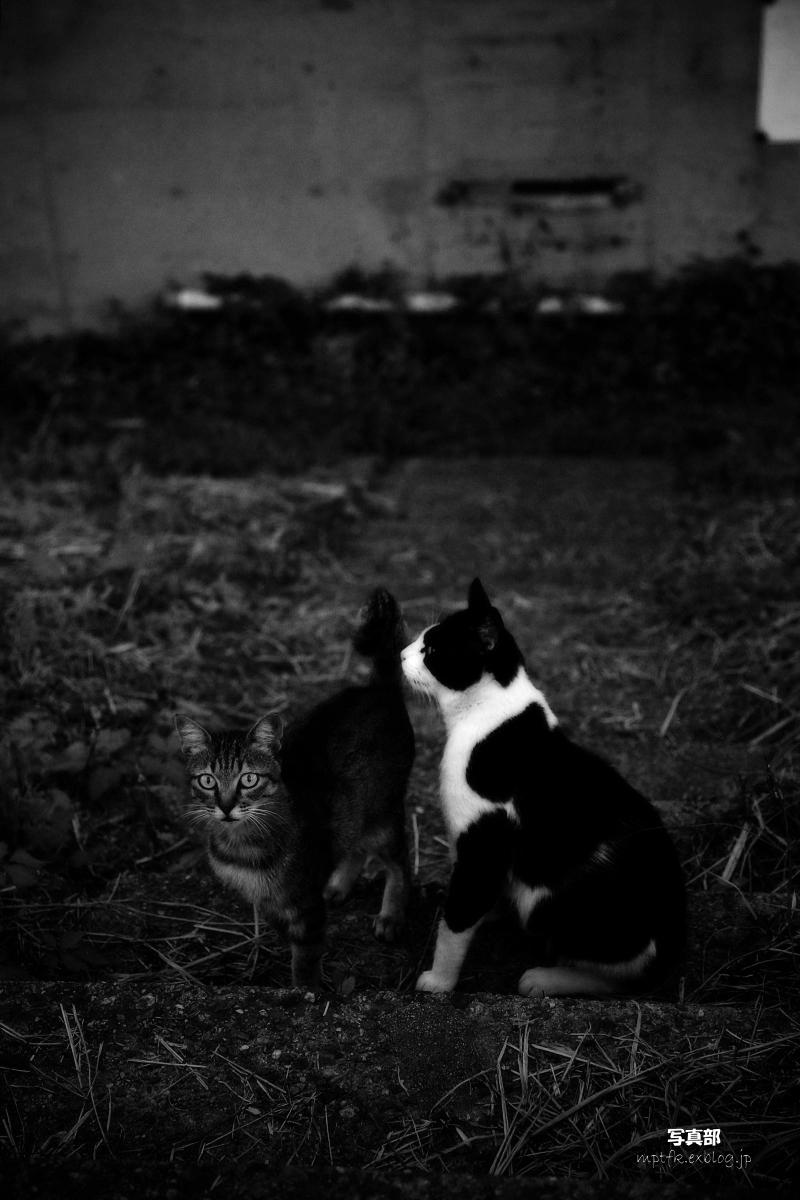 野良猫_f0021869_21395845.jpg