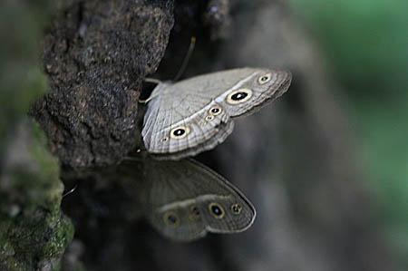 ワレモコウ2種と、今日の蝶写真_f0030085_1320299.jpg