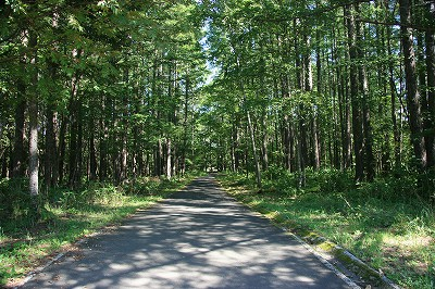 フラノ寶亭留の森を散策!_e0139694_2127429.jpg