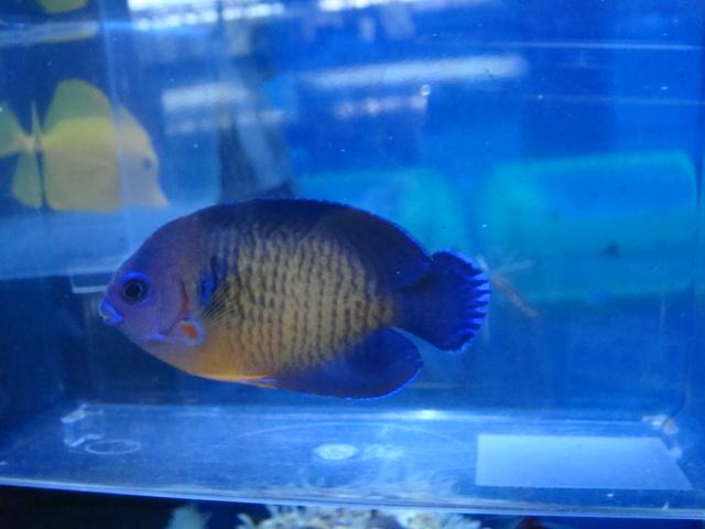 海水魚・サンゴ_f0189122_1154215.jpg