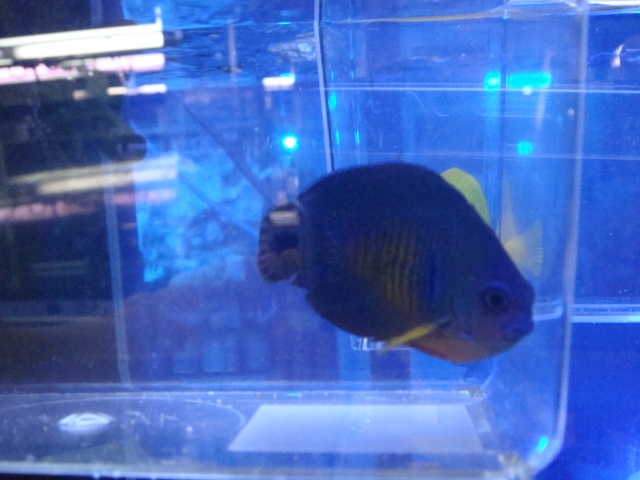 海水魚・サンゴ_f0189122_11544881.jpg