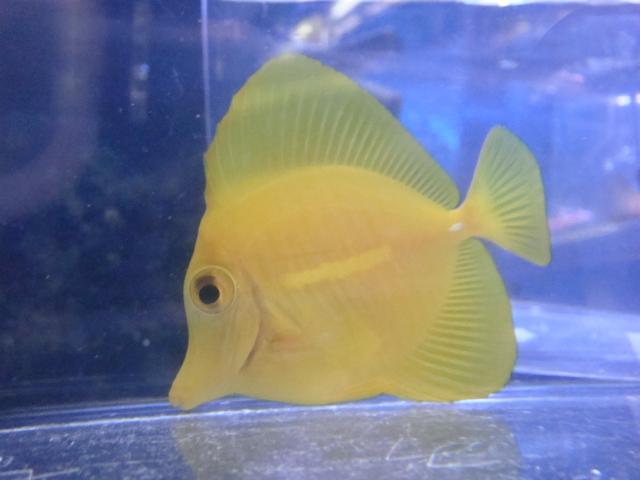 海水魚・サンゴ_f0189122_11572189.jpg