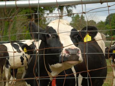 「おなりみるく工房」のアイスクリームと乳牛育成牧場_f0047524_1030368.jpg