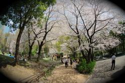 TOKYO CITY VOL5:新宿_b0065730_6561620.jpg