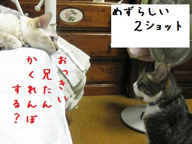 b0151748_1226196.jpg