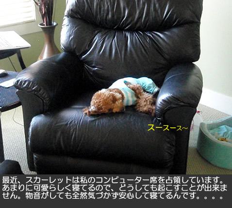 c0164491_4122036.jpg