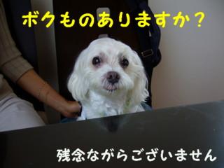 f0145192_200846.jpg