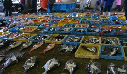 旅ゆかば その⑪ 魚市場好きである_e0077899_7532468.jpg